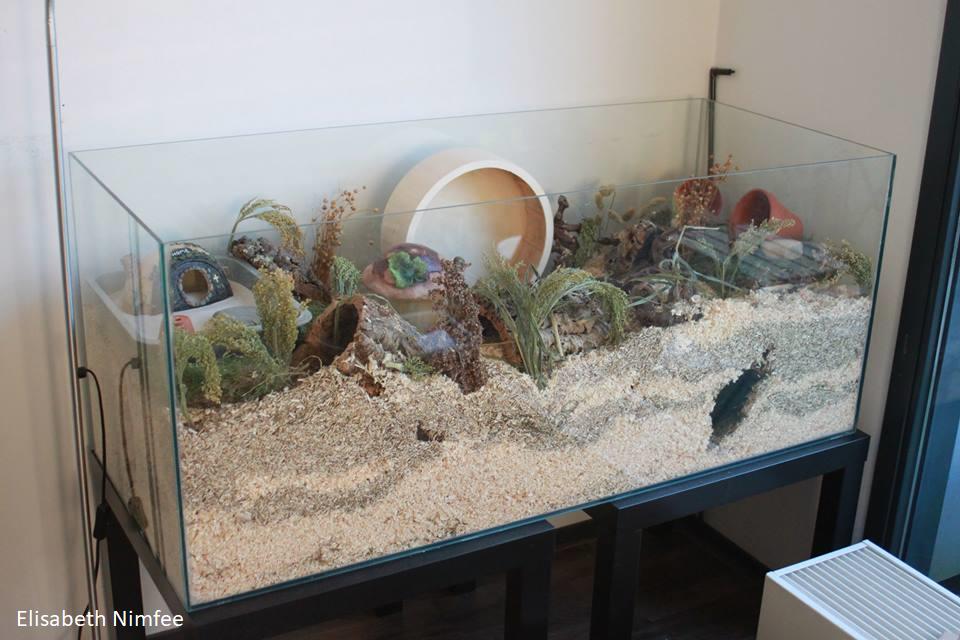 Geschikte Huisvesting Voor Weinig Geld Hamsteropvang Nona